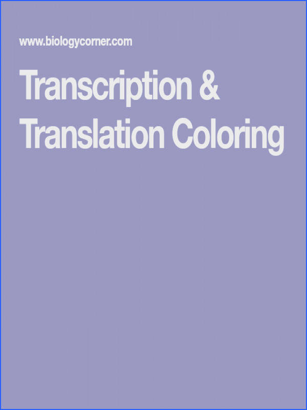Transcription is the process by which RNA is made from DNA Translation occurs when the RNA is used to create an amino acid chain This coloring worksheet
