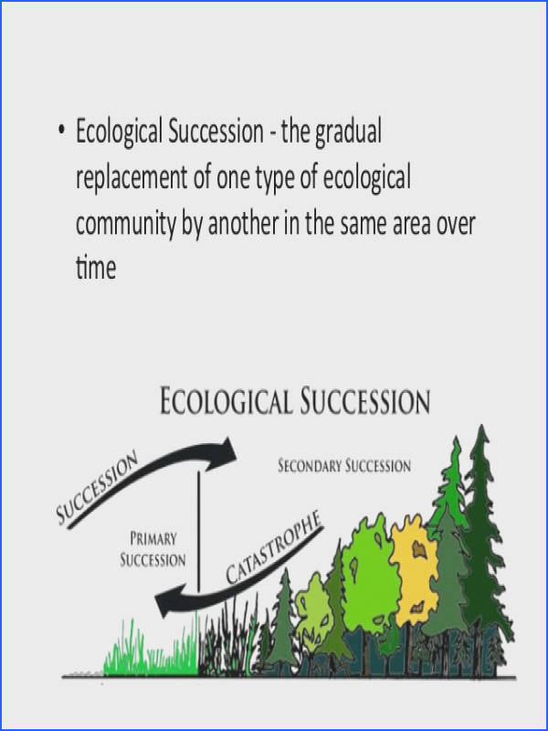 3 • Ecological Succession