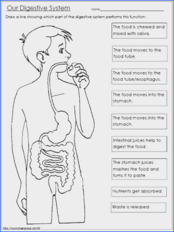 Human Digestive System For Kids Anatomy Picture Reference and Health News Apologia Anatomy Pinterest