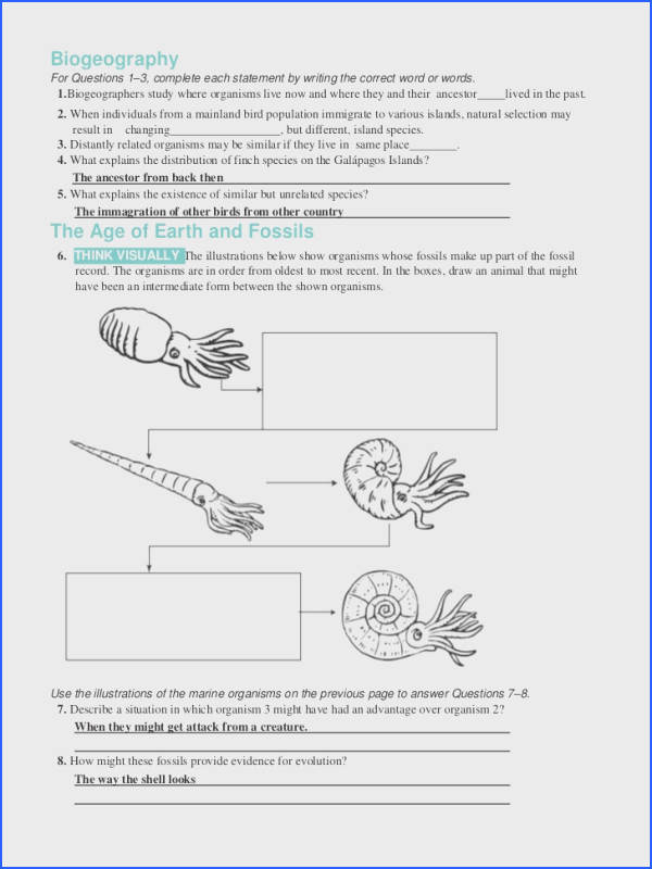 evidence for evolution worksheet mychaume com - Evolution Worksheet