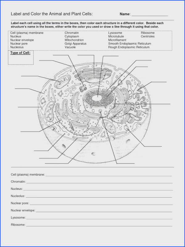 Full Size of Worksheet Template cell Cycle Labeling Worksheet Answers Atomic Structure Diagram Worksheet Cell