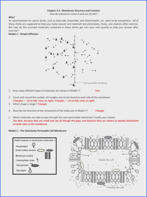 Full Size of Worksheet Template gcse Diffusion Osmosis And Active Transport Worksheets By Worksheet
