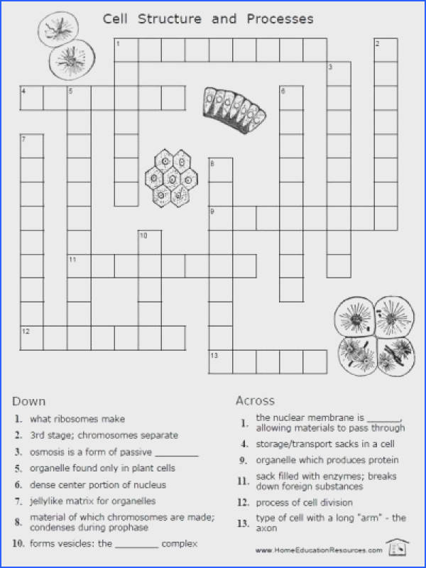 FREE cells worksheets 12 pages easy to from FransFreebies
