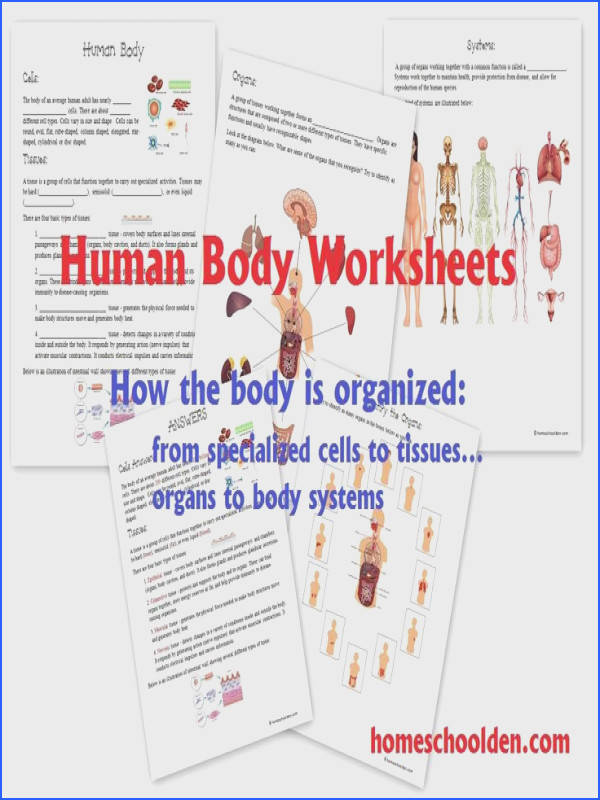 Human Body Worksheets Cells Tissues Organs and the Human Body Systems Homeschool Den paid resource