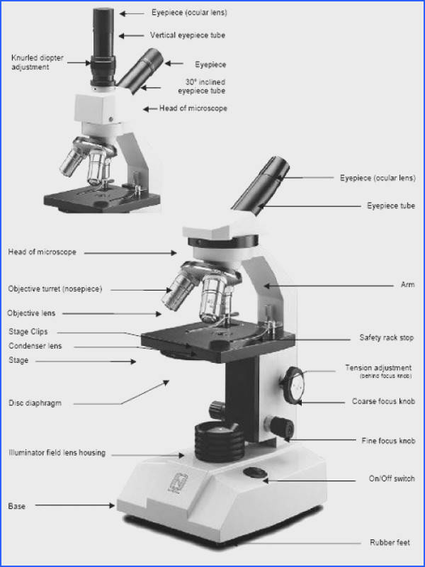 13 Best How to Microscope Information Images On Pinterest Image Below Parts Of A Microscope Worksheet