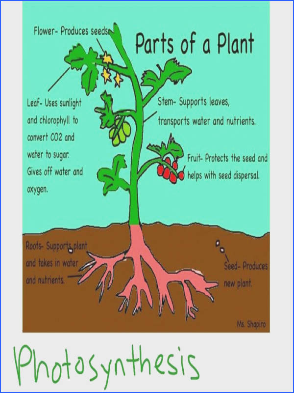 plant cell parts simple explanations