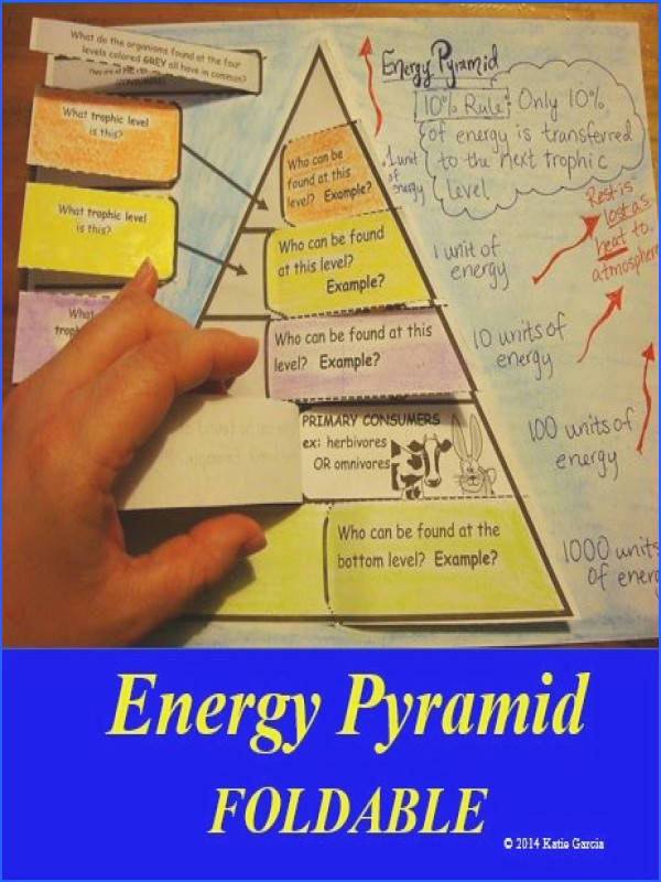 Energy Pyramid FOLDABLE that covers the different levels in a pyramid ex producers