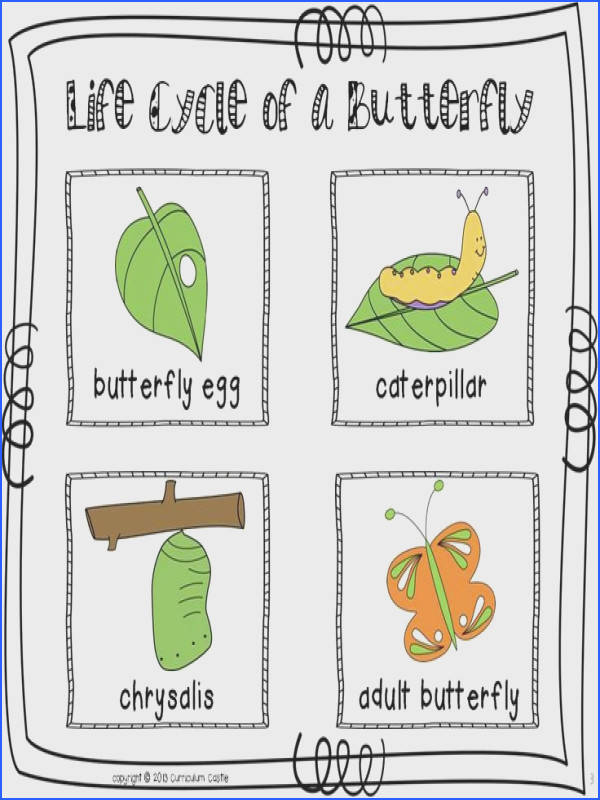 Life cycle of a butterfly sequencing cards in color and black &