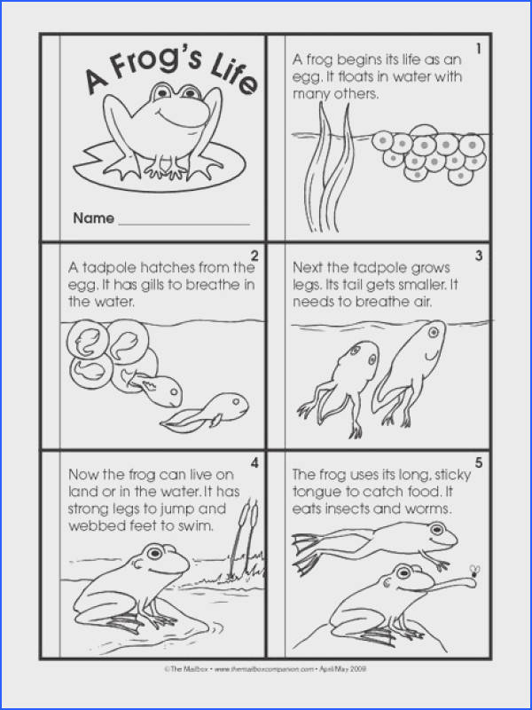Science Booklet life cycle of a frog
