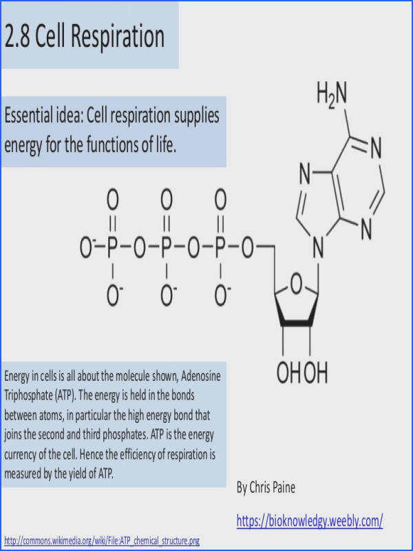 BioKnowledgy 2 8 Cell respiration