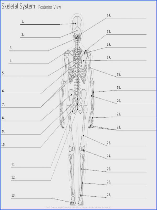 Skeletal system diagrams are illustrations of the human skeleton See how you can make a custom skeletal diagram browse examples learn more
