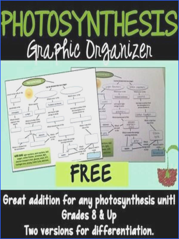 synthesis Graphic Organizer to help students map out the steps of photosynthesis differentiated version included