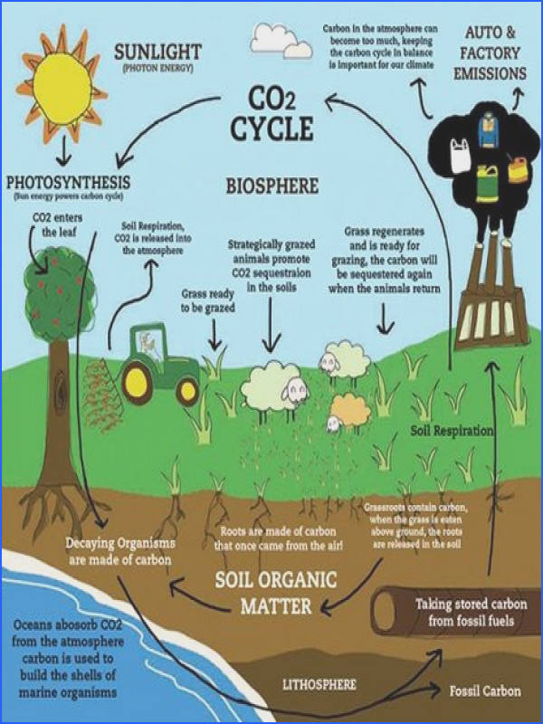 25 best The Carbon Cycle images on Pinterest