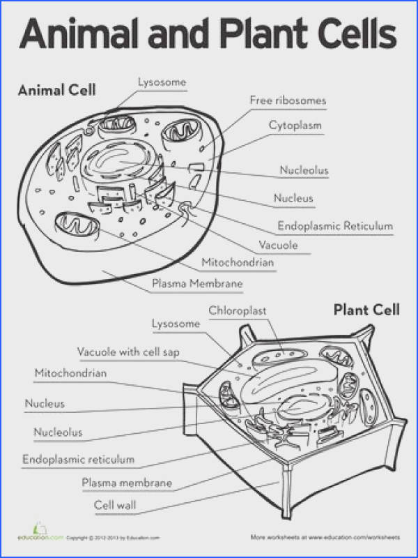 Worksheets Animal and Plant Cells