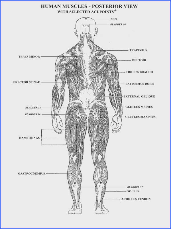 worksheets muscles human body Google Search