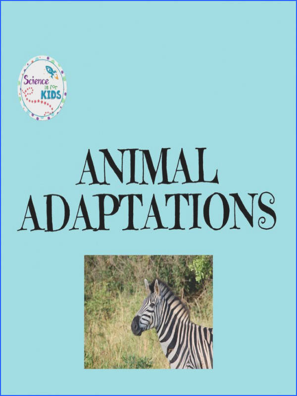 36 best Animal Adaptations images on Pinterest