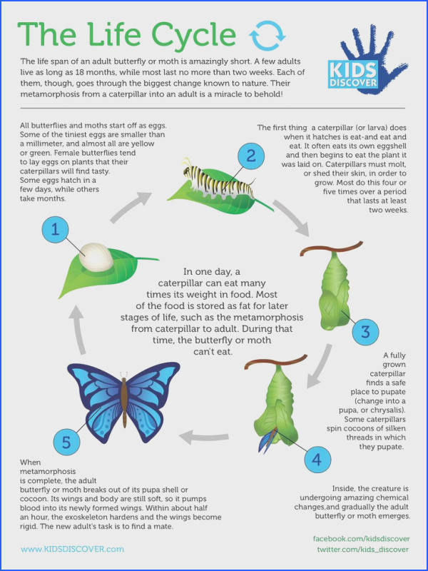 Metamorphosis Learn all about the life cycle in this informative infographic perfect for your classroom curriculum