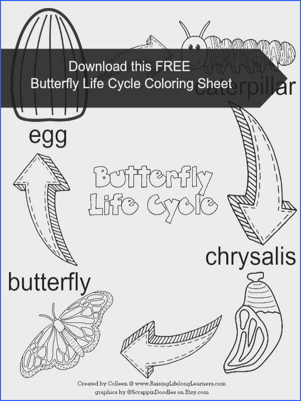 Butterfly Life Cycle Learning Fun