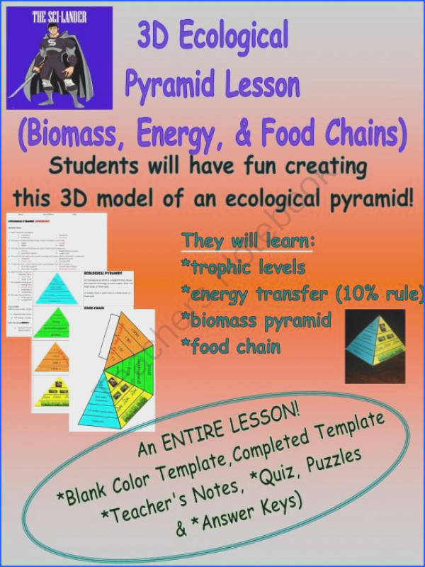 3D Ecological Pyramid Model Lesson Biomass Energy and Food Chain from The Sci