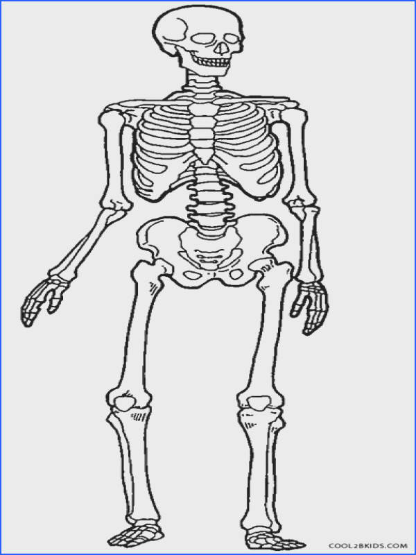 40 Skeletal System Coloring Pages Human Colouring Skeleton