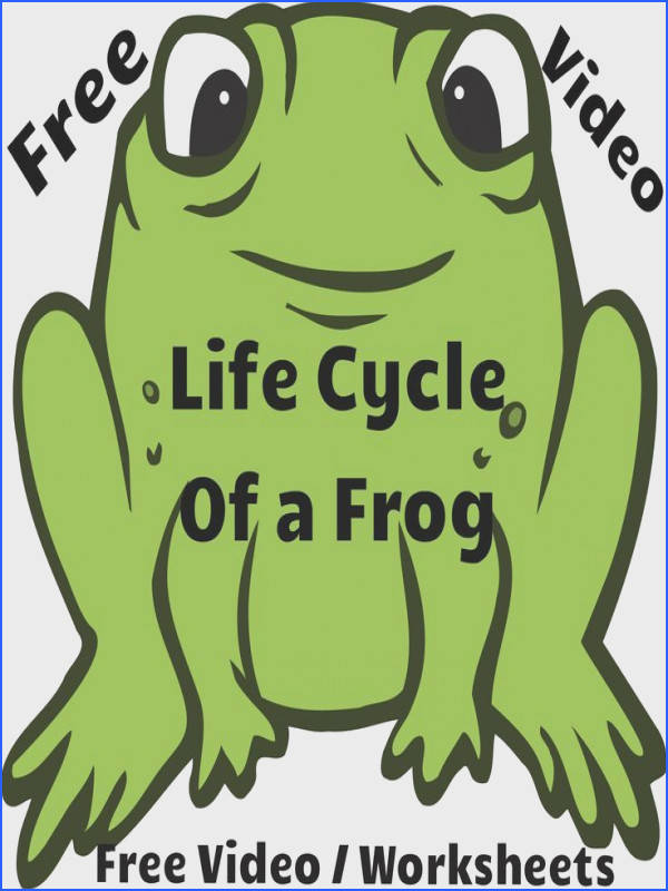 Don t you teach frog life cycle in K Free video lesson Life Cycle of a Frog Along with the video I have also linked the Frog Life Cycle worksheets