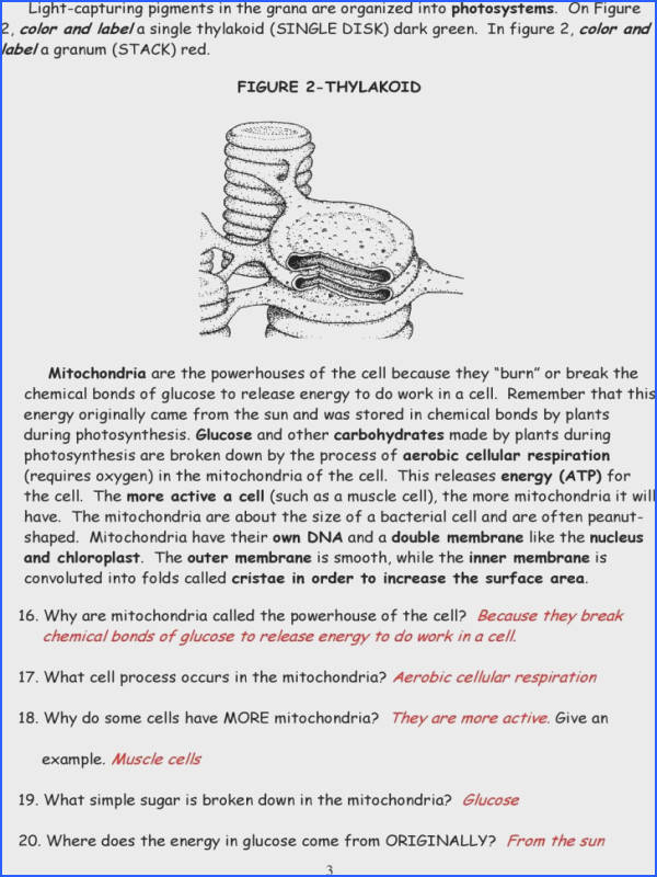 9th Grade Biology Worksheets Worksheets for All Image Below Chloroplast and Mitochondria Worksheet