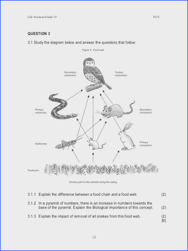 A Food Web Worksheet Answers Worksheets for all Download and Worksheets