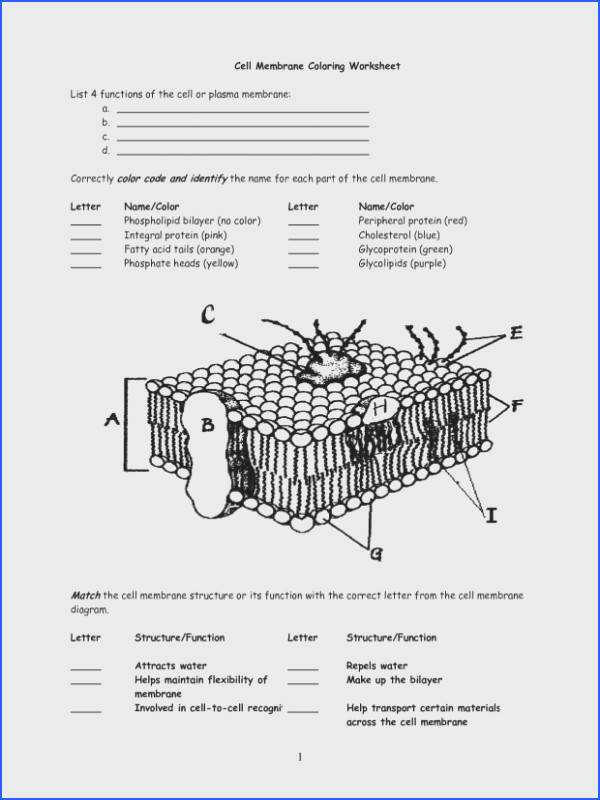 Best Pretty Cell Membrane Coloring Worksheet Answer Key Pages Free Image Below Cell Membrane Coloring Worksheet