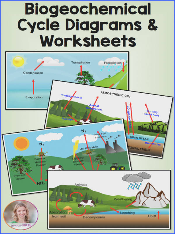 Biogeochemical cycles water carbon nitrogen and phosphorus diagrams and worksheets