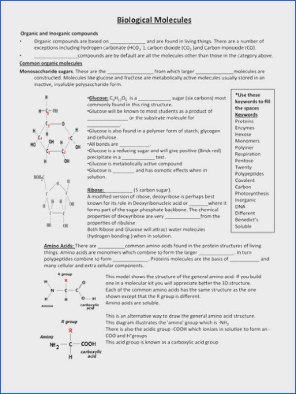 Biological Molecules Worksheet by stefan richards Teaching Resources Tes