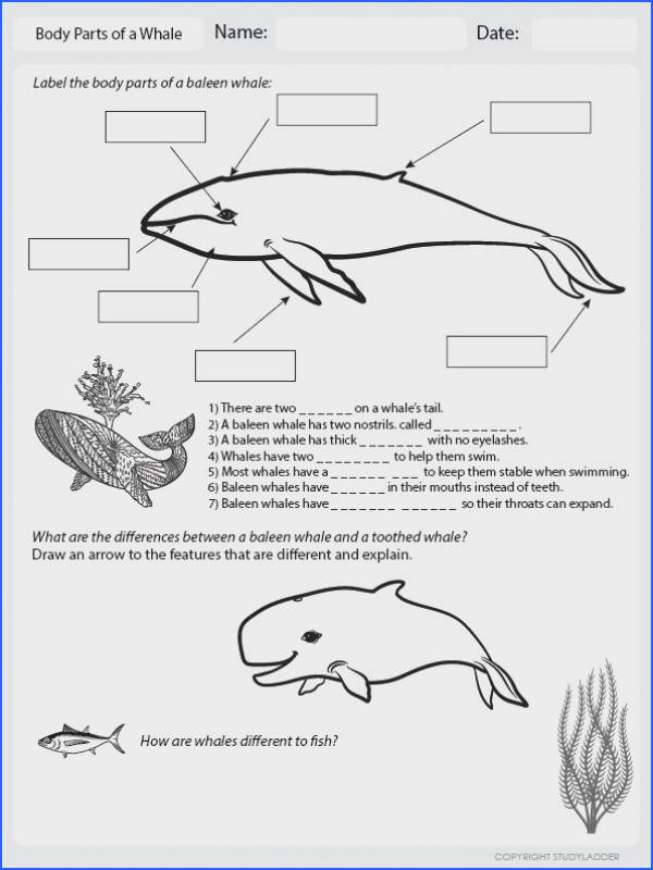Body Parts of a Whale Worksheet to