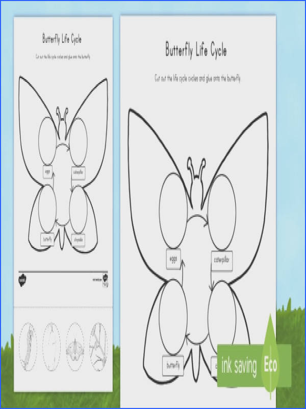 Butterfly Life Cycle Cut and Paste Worksheet Activity Sheet USA Early Childhood Science