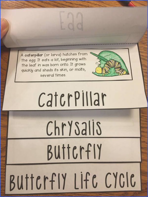 Butterfly Life Cycle FLIP Book perfect for 1st grade and 2nd grade science lessons about insects