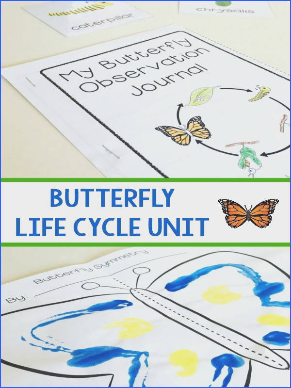 Butterfly Life Cycle Unit for Preschool Kindergarten or First Grade