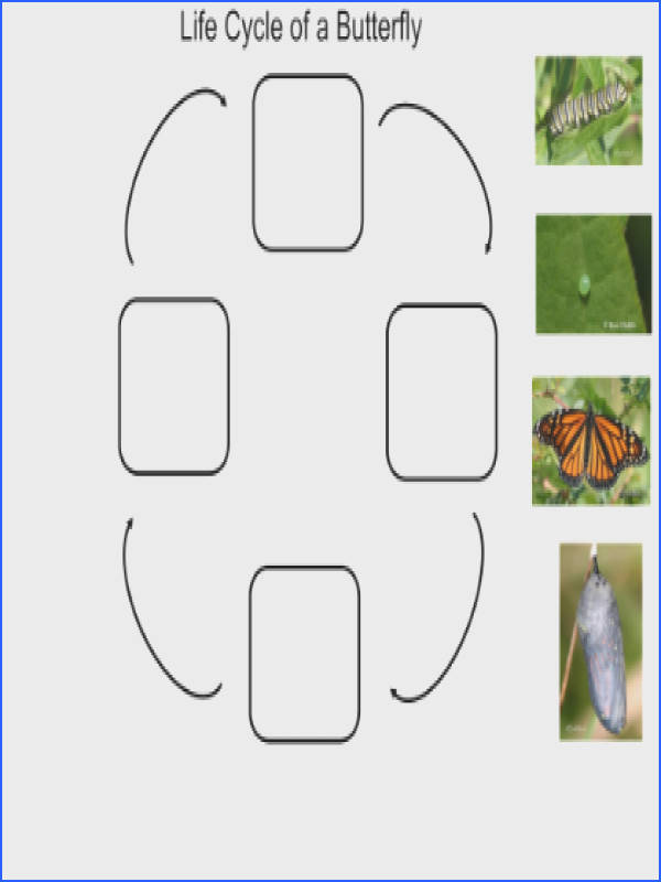 Butterfly Life Cycle [SMART Notebook lesson]