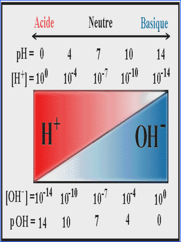 Ph and Poh Calculations Worksheet | Mychaume.com