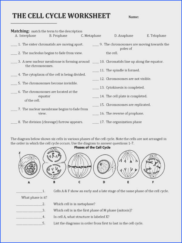 Cell Division and the Cell Cycle Worksheet Cell Division and the Image Below Cell Cycle and Mitosis Worksheet