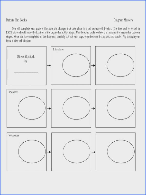 cell division worksheet answers for meiosis identifying processes answers meiosis worksheet identifying processes the image kid