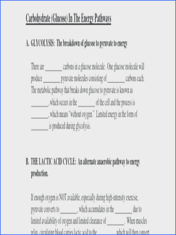 cell energy worksheet plus chapter 9 energy in a cell worksheet cells worksheet answer key mitochondria