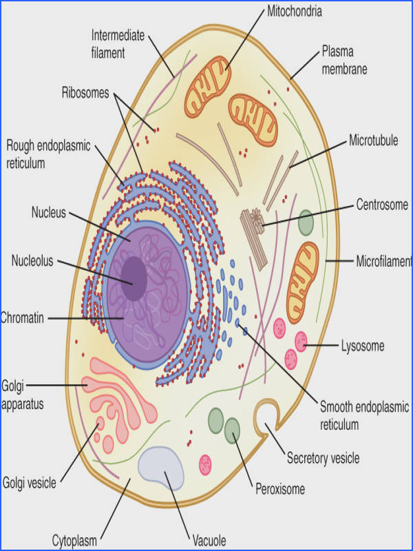Cell Membrane Color Sheet and Build a Cell Membrane Activity TeachEngineering