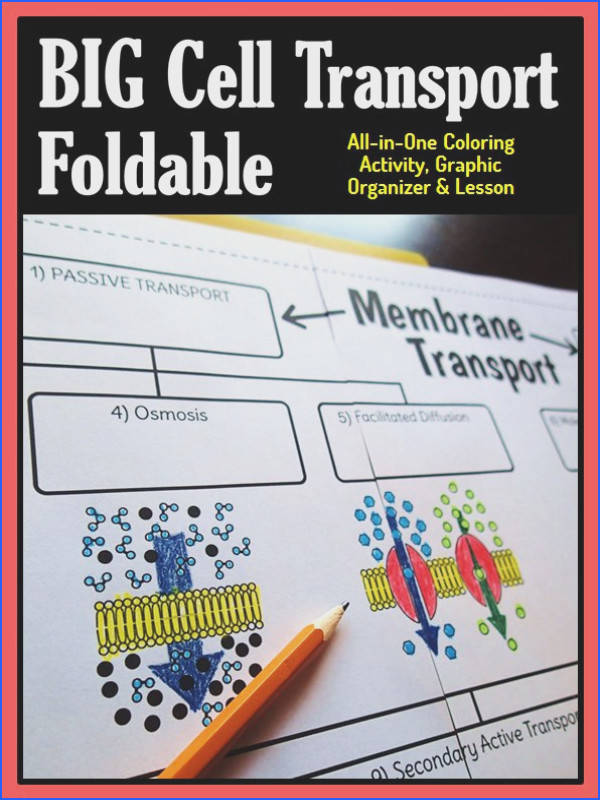 Cell Membrane Transport Big Foldable for Interactive Notebook or Binder
