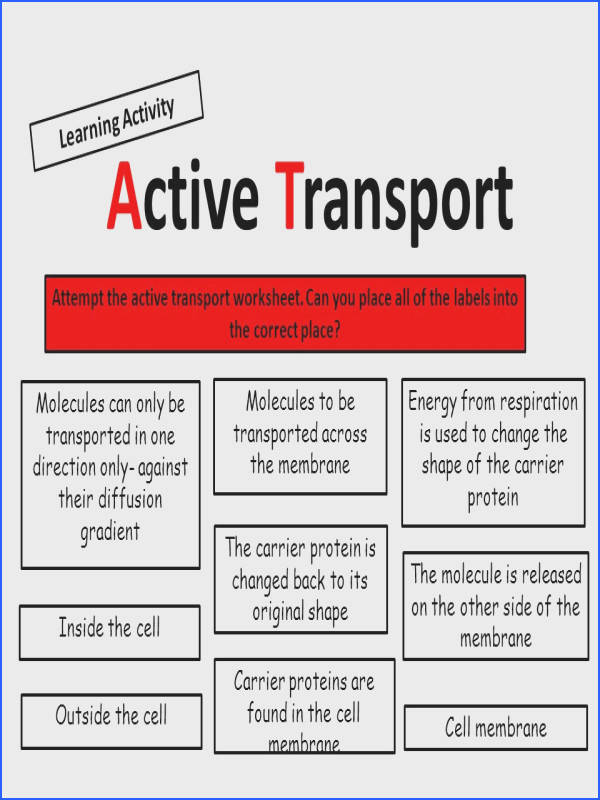 8 Active Transport Learning Activity