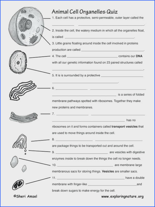 cell structure and function worksheet for plasma membrane diagram coloring worksheet answers