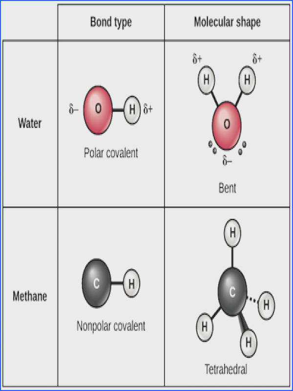 Table showing water and methane as examples of molecules with polar and nonpolar bonds respectively