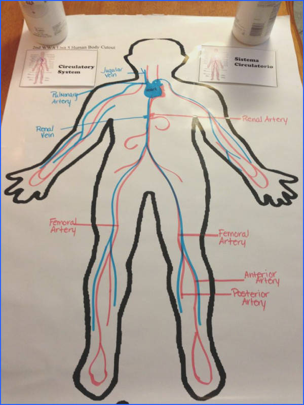 circulatory system except we d draw animals and their systems