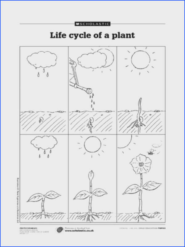life cycle of plants flowers integrating storyboarding art with science