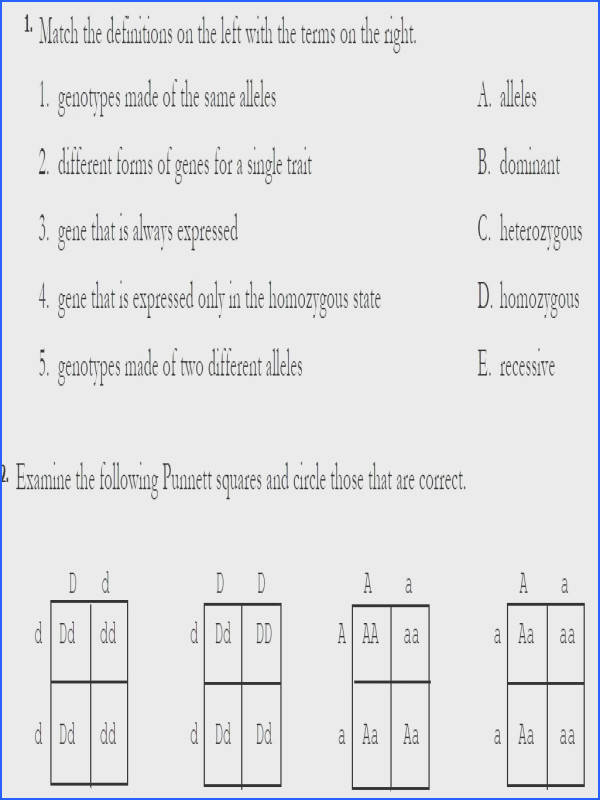 dihybrid cross practice worksheet monohybrid cross worksheet