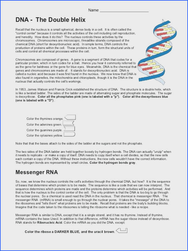 Category worksheet Tags 83 dna replication study guide worksheet answers dna molecule and