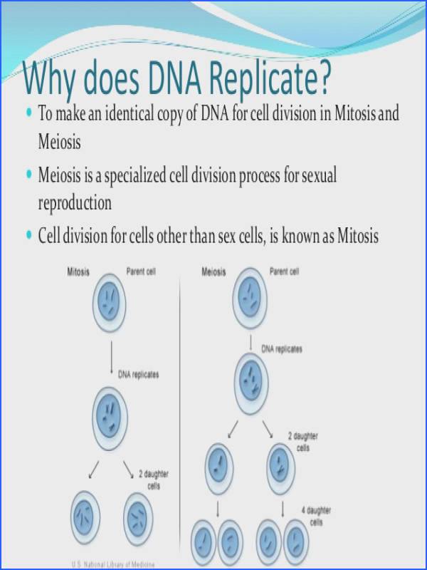 dna replication review for matching worksheet final 2 638