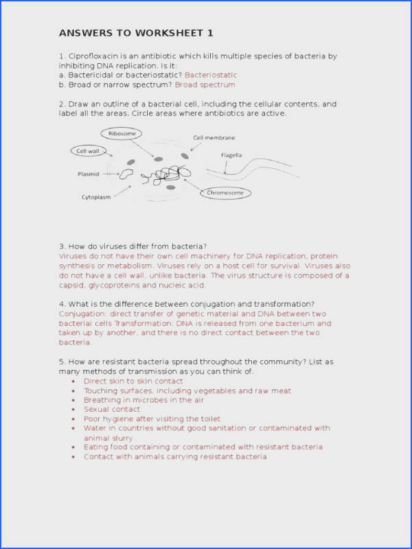 dna molecule and replication worksheet answers plus large size of mutations worksheet answers structure and replication